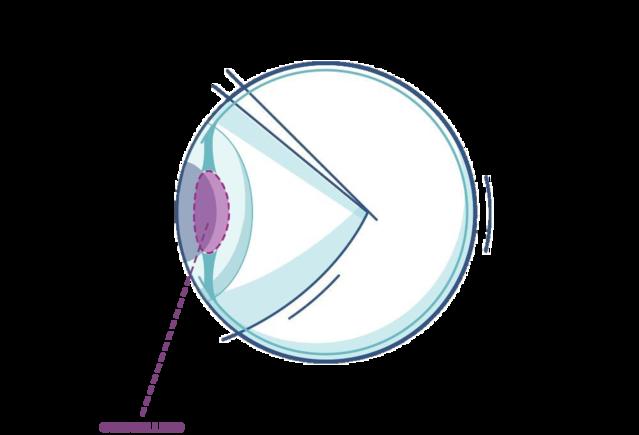 anatomia occhio cristallino illustrazione