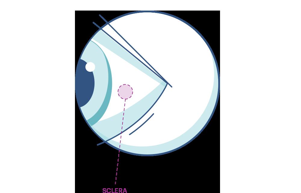 anatomia occhio sclera illustrazione